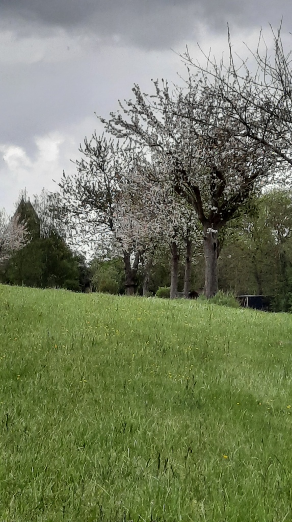 2021 Gästezimmer Moulin du Locheur Pommiers en fleurs